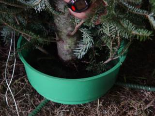 Christmas Tree Water.Maintaining Freshness Nc State Extension