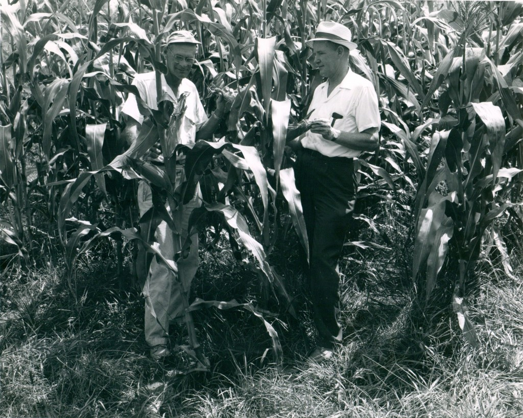 July 1965  - P.S. Ferguson, farmer and R.L. Lyday, County Agent, viewing corn sod planted in 10-year old orchard bluegrass sod.