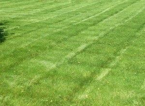 StripedLawn