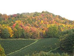 Fall (August through harvest)