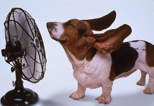 keep-cool-dog