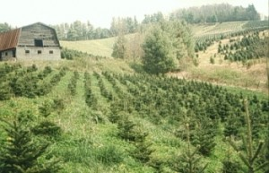 trees_weeds2