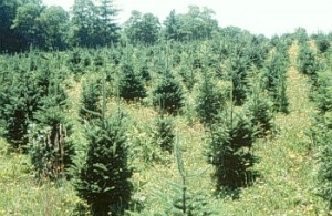 trees_weeds7