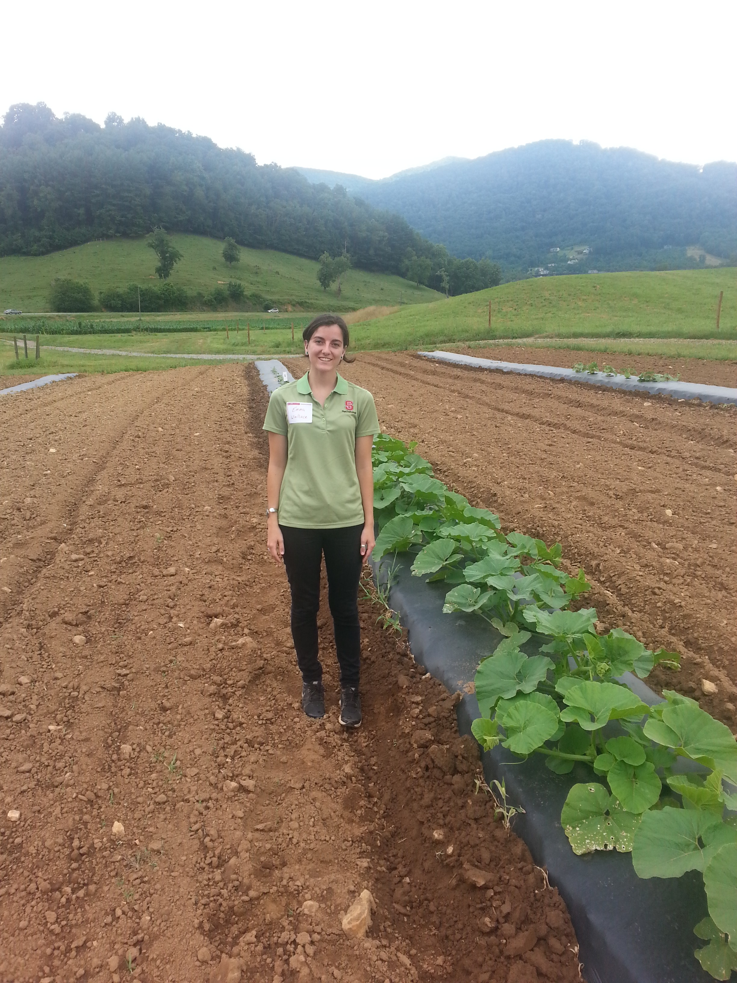 Emma Wallace from the NCSU Vegetable Pathology Lab in the Mountain Research Station Sentinel Plot