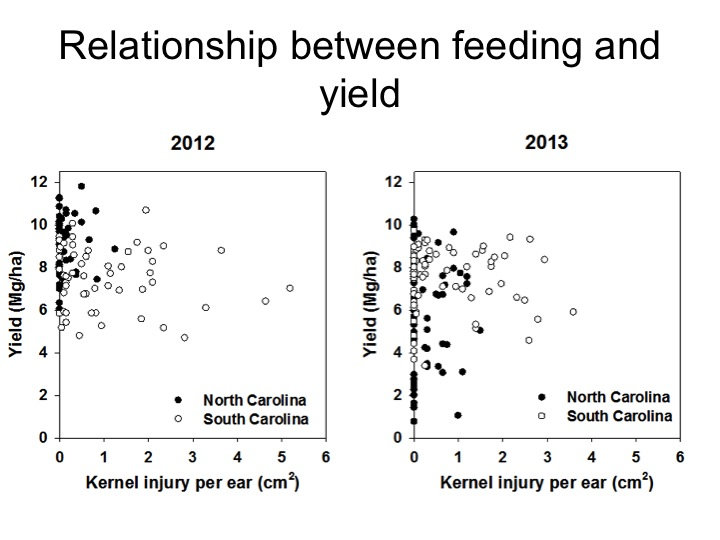 As corn earworm injury increases (measured by centimeters of kernels consumed), yield does not decrease at densities of corn earworm that are encountered in timely-planted corn. Yield in this graph is reported as metric units, rather than the US standard of bushels/A.