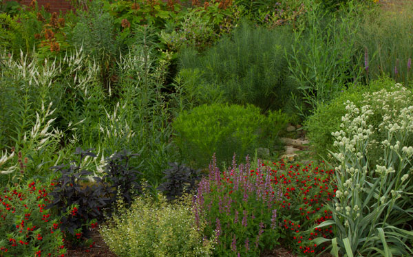Early July in the pollinator garden.