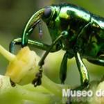 Meseo-de-Insectos