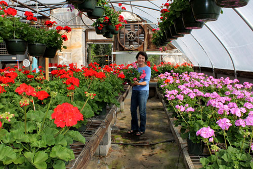 Amy Sugg with her gorgeous geraniums at Bonlee Grown Farm
