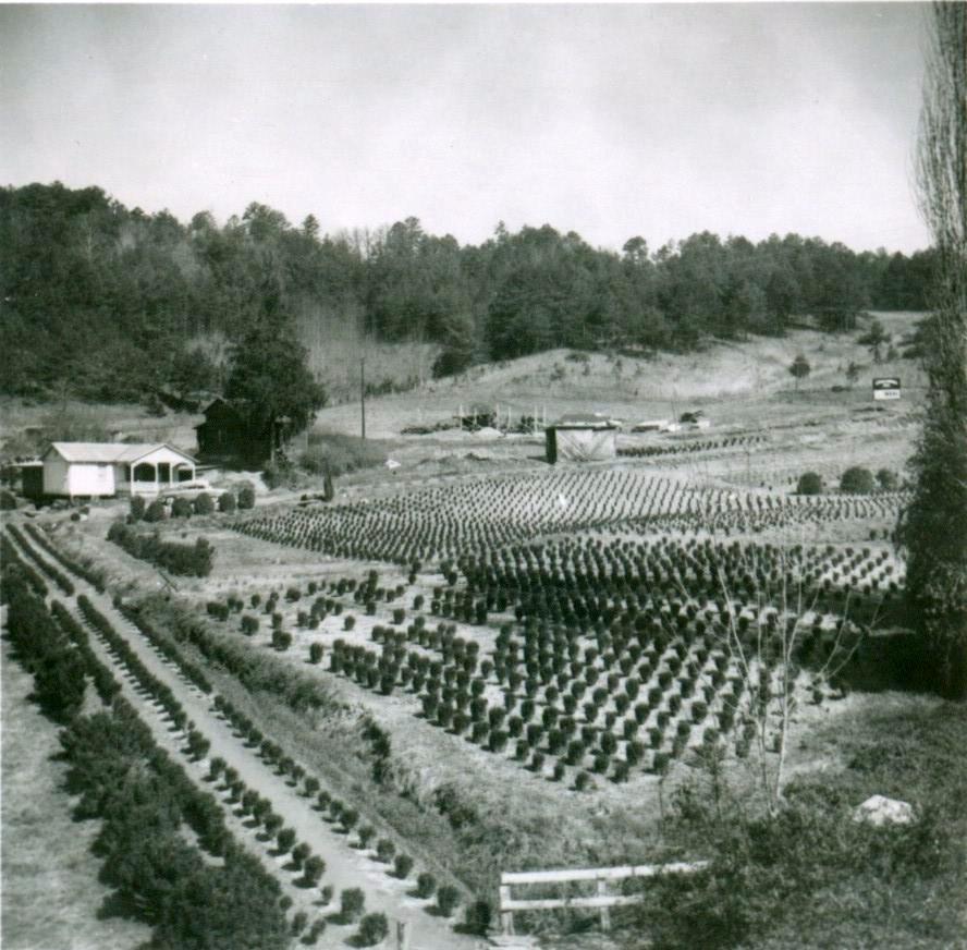 Cunningham Farm, (Almond) Swain County