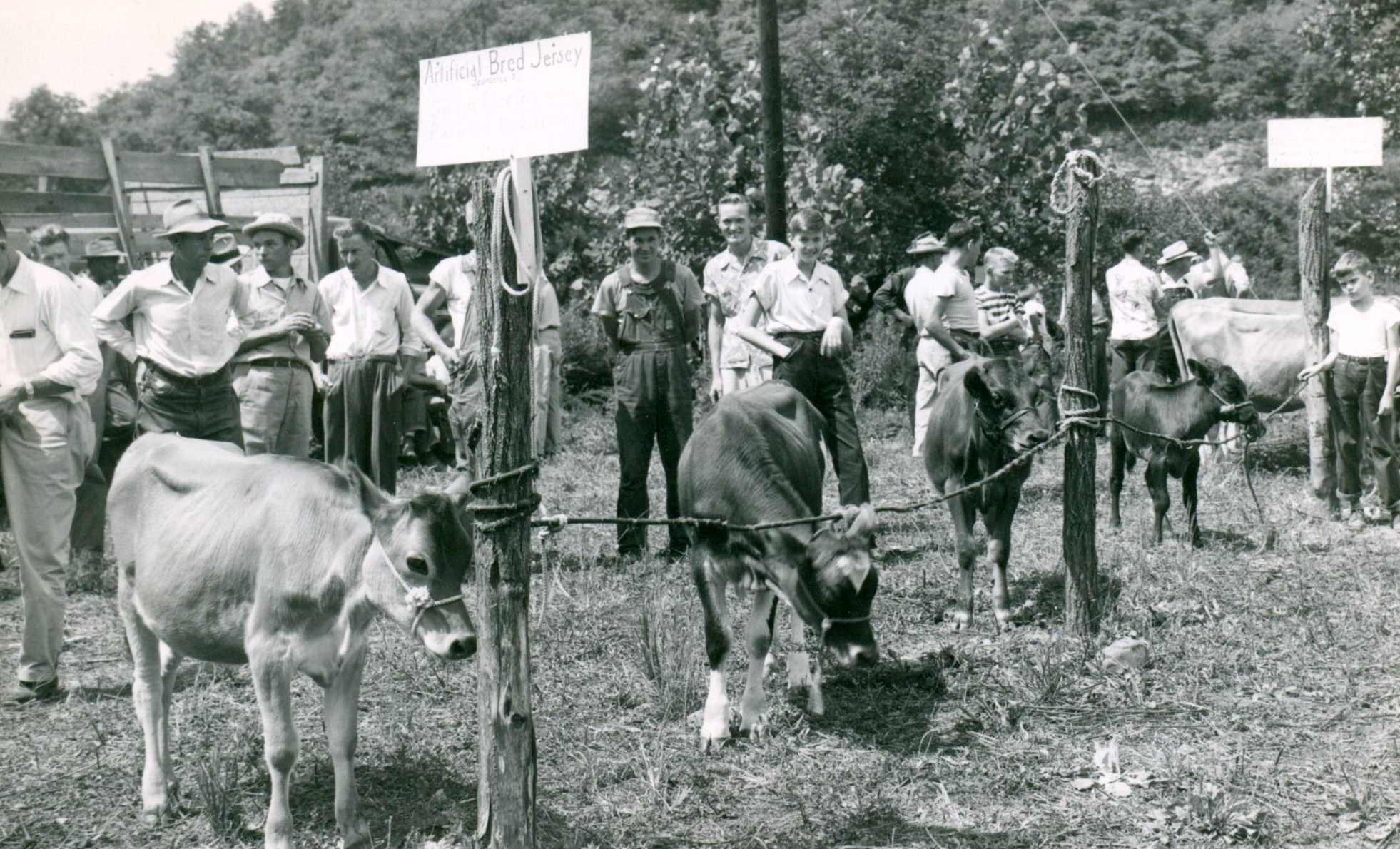 R Hogs History Wall – Agric...