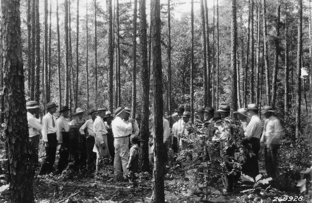 Extension's first forester discusses woodland thinning