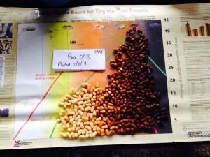 peanuts (variety Ga 09B) from pod blasting on 9/8/14