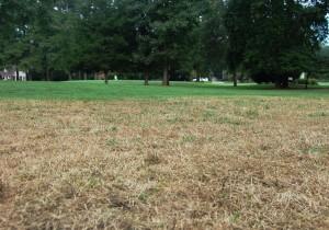 Lawn damaged by armyworm.