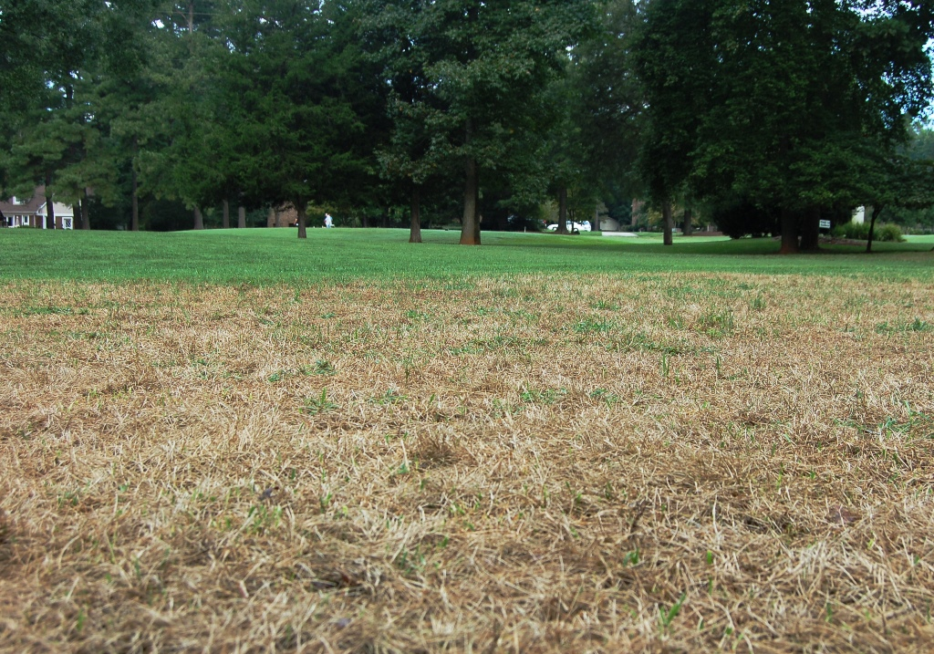 Fall Armyworms On The March Through Piedmont Lawns (2014)