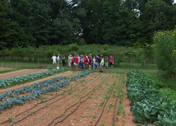 Looking at the fall crops at Peregrine Farm.