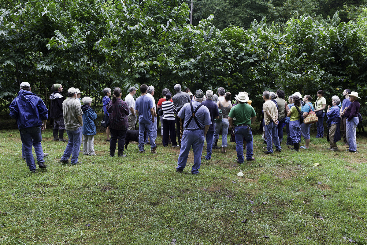 Wynn grows 250+ pawpaw trees in his orchard.