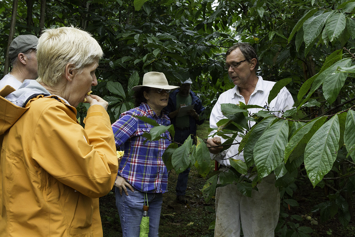 Visitors enjoyed tasting the pawpaws.