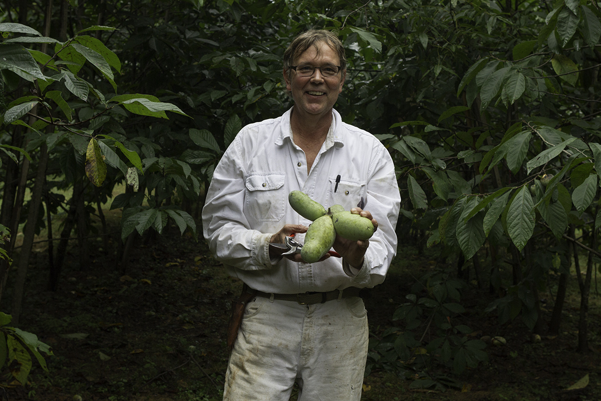 Wynn's pawpaws are in high demand from area chefs. Local breweries also use them to make pawpaw beer.