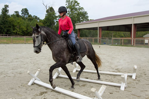 Head trainer Kathy Daly on Allegra