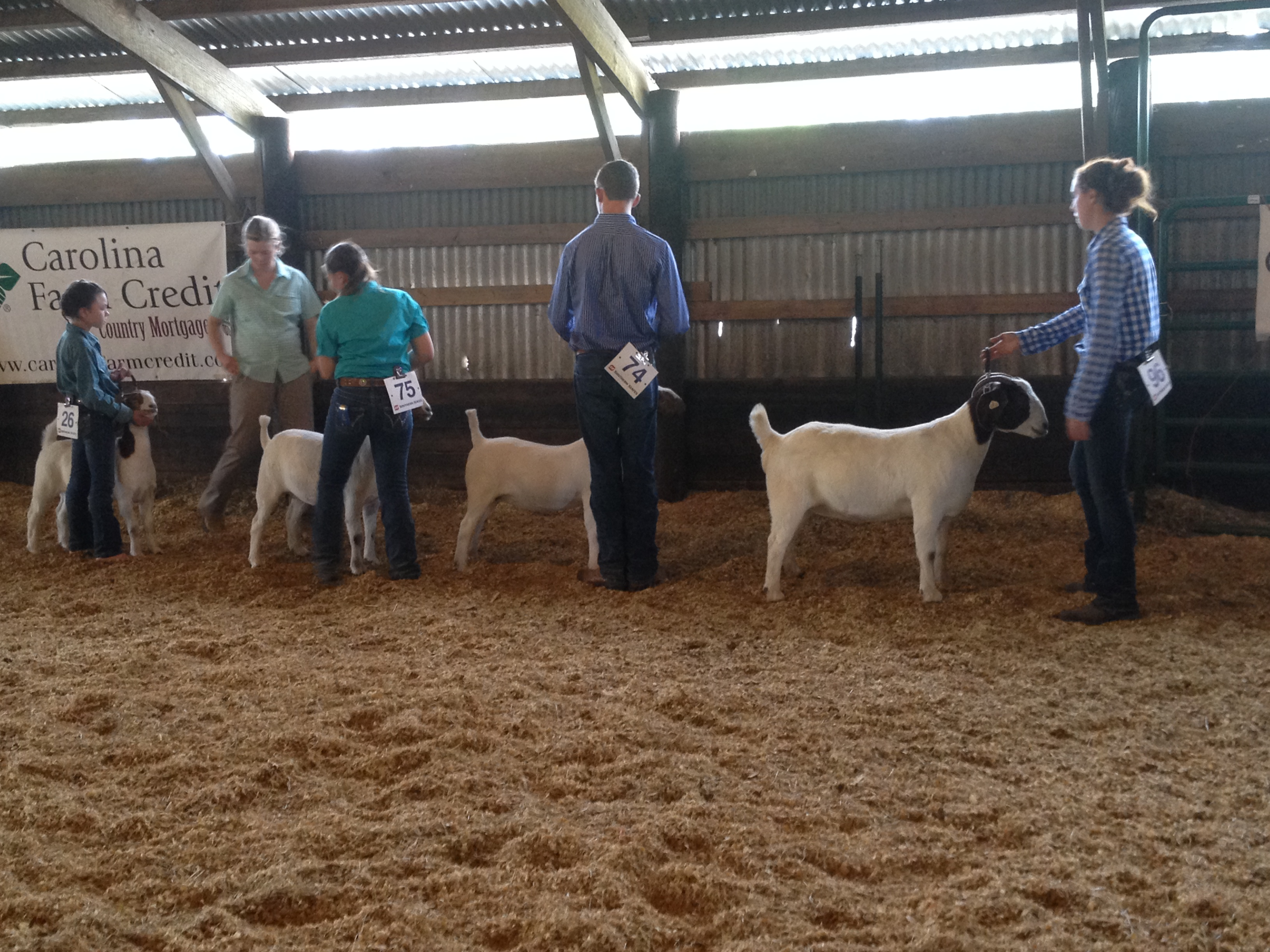Youth showing goats.
