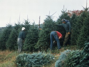 Christmas Tree Farm Safety | North Carolina Cooperative Extension