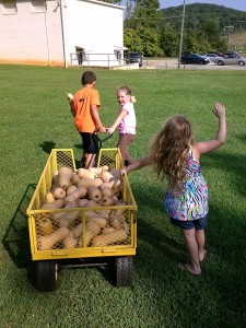 Photo taken by Darlene Berry; bringing in the harvest at Whitnel Elementary School