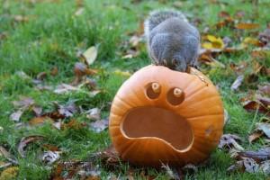2013-extreme-pumpkins-7