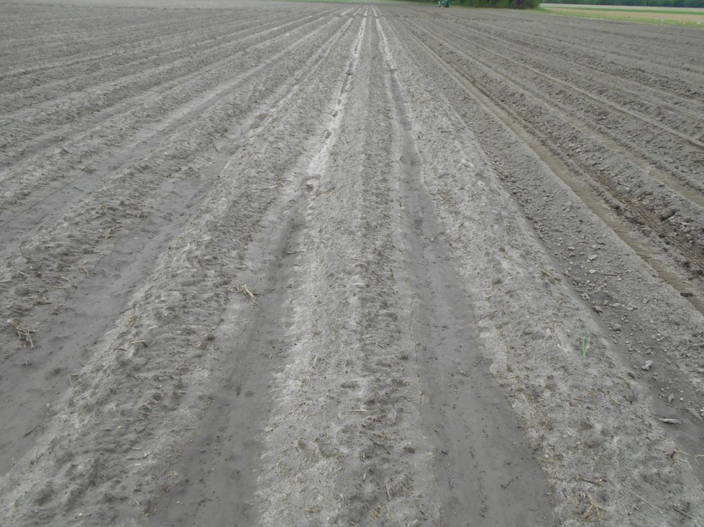 Unplanted and planted areas of a field destined for peanut production.