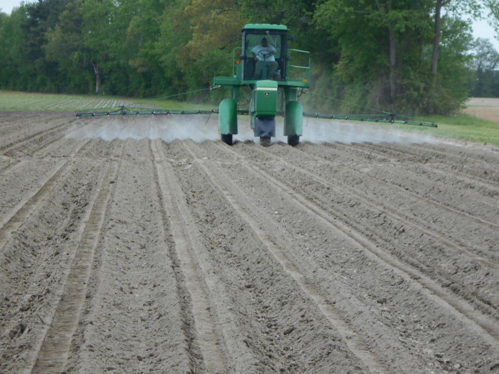 Peanut field being treated with herbicide immediately after planting.