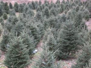 Ted Craig Tree Farm - Swain County, NC
