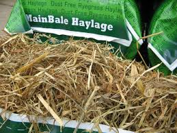 Some Guidelines to Remember When Feeding Haylage | North
