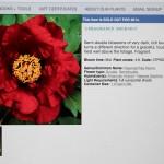 Camellia picture with description in online catalog