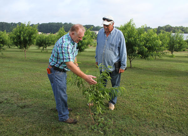 NCSU Fruit Tree Specialist Dr. Mike Parker (left) with grower Harold Howard
