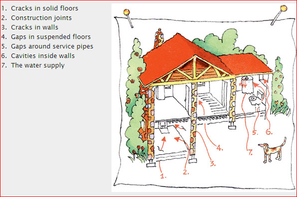 radon-pathways-inside-a-home.png