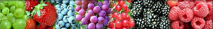 small_fruits_header