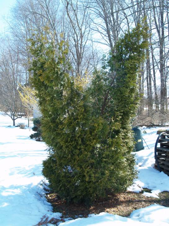 Prepare Your Landscape For Snow North Carolina