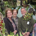 Happy-faces-orchids