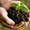 CompostingPicture