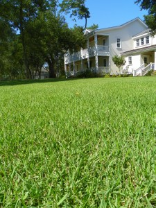 Lawn.