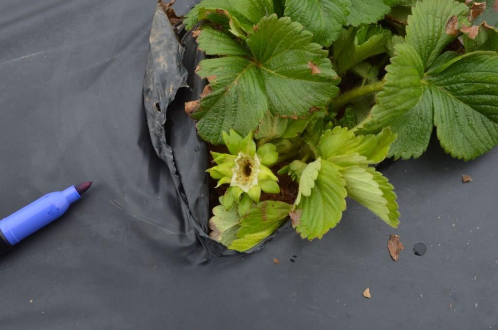 damaged bloom