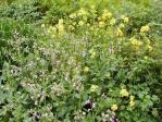 224_weeds