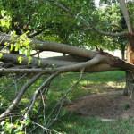 bradford damage