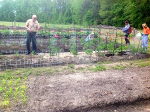 Installing tomato cages at the community garden