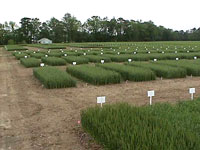 Plots of crops growing