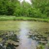 algae growing on pond