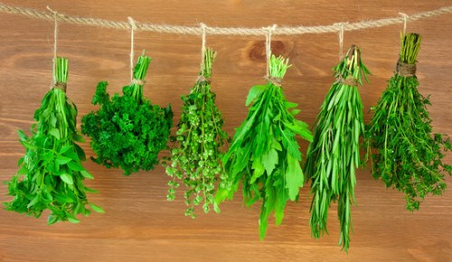 Image result for culinary herbs