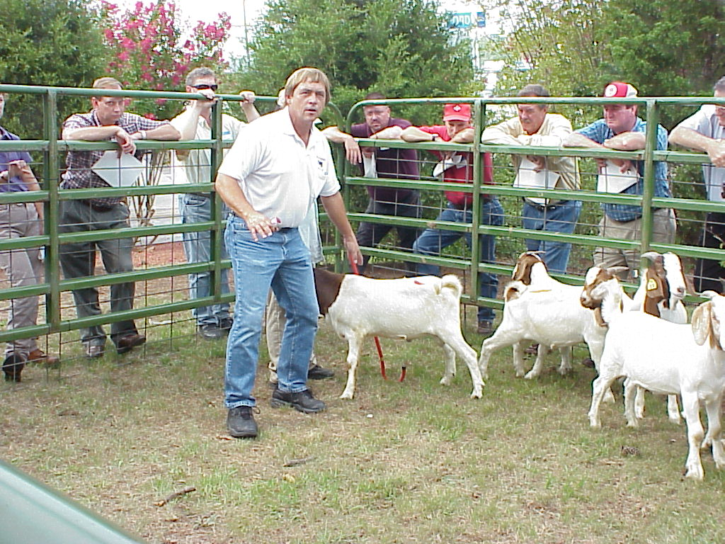 Goats and Sheep | NC State Extension