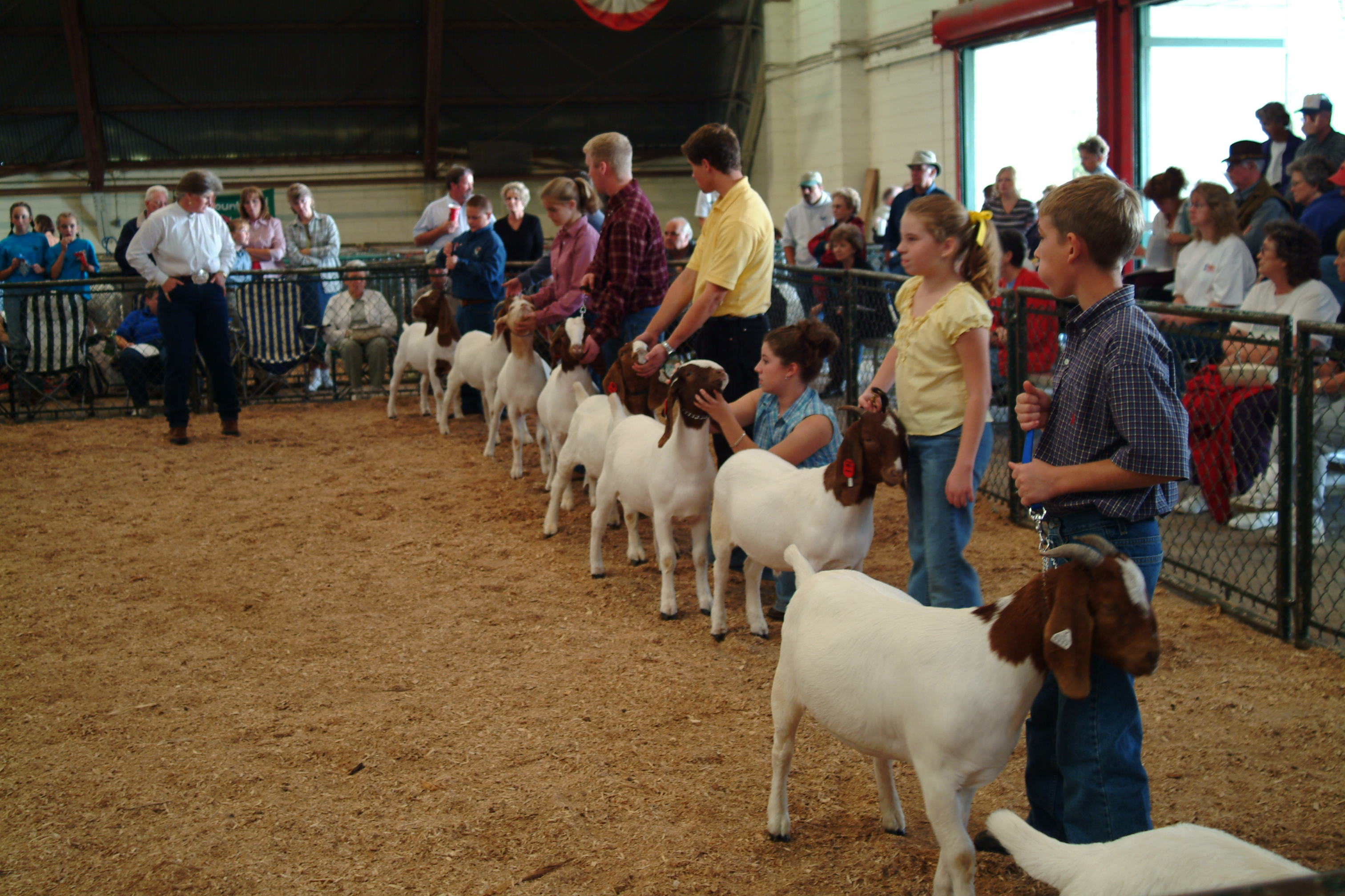 Image result for showing livestock nc state fair