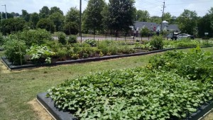 Highland Community Garden