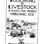 prussic acid